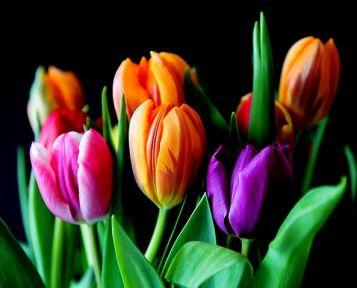 flowers-429041__480