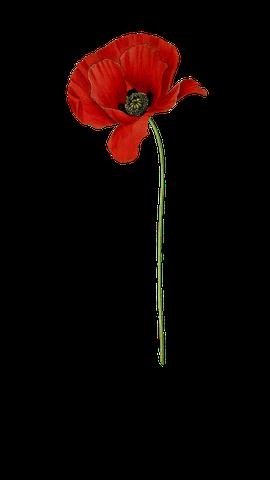 poppy-1952013__480