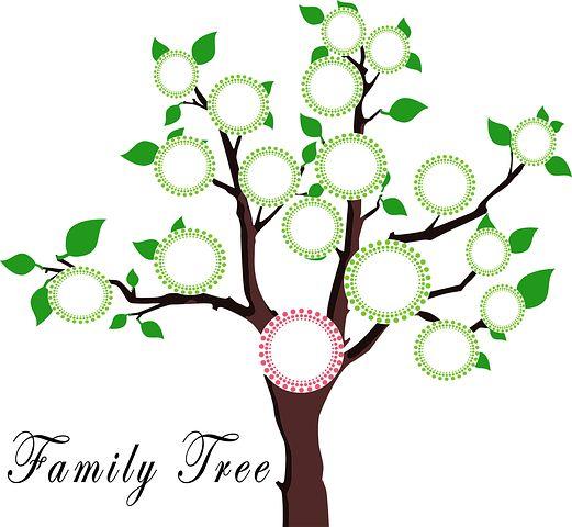 tree-1951473__480.jpg