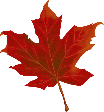leaf-984998__480.png